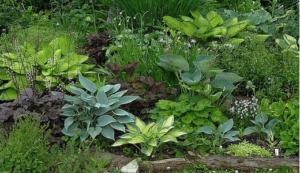Разнообразие декоративных садовых насаждений