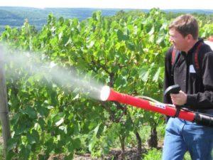 Пошаговая подкормка винограда перед цветением