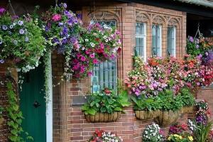 Вертикальное озеленение на даче