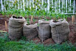 Как правильно посадить картошку в мешках