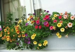 Какие лучшие ампельные цветы