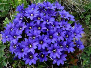 Какие есть низкорослые садовые цветы для дачи