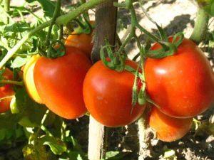 Какую именно почву любят помидоры