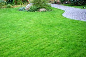 Какую траву использовать в войне против сорняков