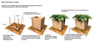 Способы выращивания картофеля в ящиках в домашних условиях