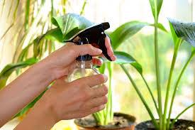 Как часто нужно поливать цветы зимой в домашних условиях