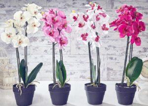 Как правильно отделить детку орхидеи от материнского растения