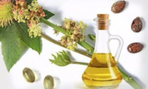 Как правильно поливать цветы касторовым маслом