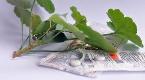Как правильно поливать цветы янтарной кислотой в таблетках