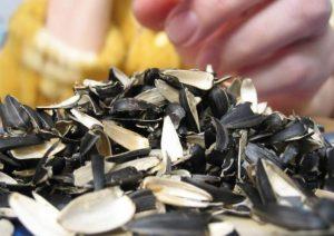 Как применяется шелуха от семечек как удобрение