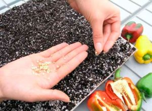 Как проводится подготовка семян к посеву