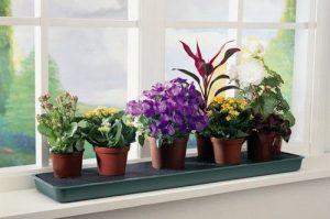 Какие цветы можно держать в спальне