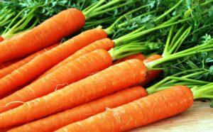 Какие сорта моркови лучшие для хранения на зиму