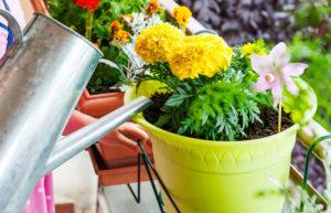 Какой водой нужно поливать комнатные цветы