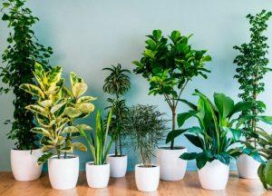 Лучшие комнатные растения, очищающие воздух в квартире