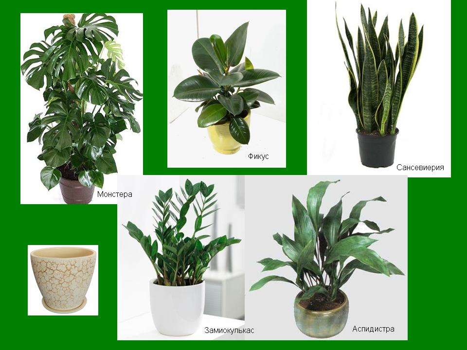 виды комнатных растений с фото и названиями будет