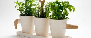 Пошаговое выращивание зелени на подоконнике в домашних условиях