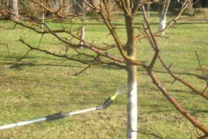 Правила обработки сада осенью от вредителей и болезней
