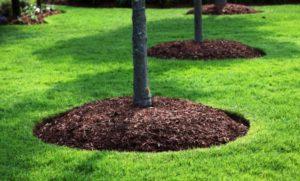 Стоит ли применять опилки для огорода