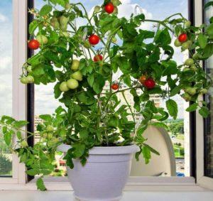 Выращивание овощей зимой в домашних условиях