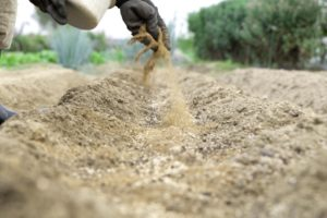 Как правильно применяется костная мука для удобрения на огороде