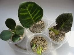 Как правильно применять вермикулит для растений