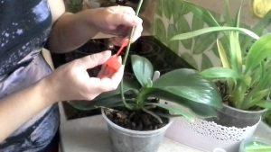 Как применяется цитокининовая паста для комнатных растений