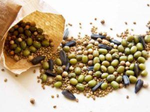 Как выбрать качественные семена овощей