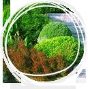 Газон - одно из звеньев ландшафтного дизайна: его виды и правила ухода
