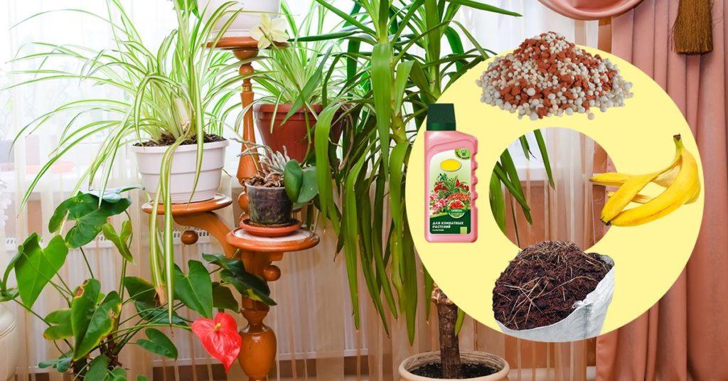 Как и чем подкормить комнатные растения