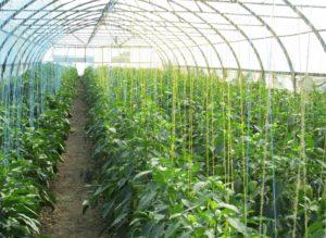 3 важных элемента для роста сельскохозяйственных культур