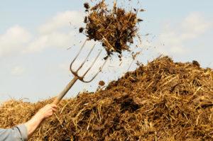 Какой навоз лучше использовать для огорода: конский или коровий