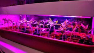 Фитолампа для рассады - гарантия вашего урожая